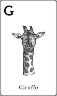 4d animal card